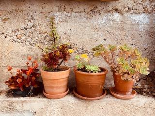 LAs plantas en el feng shui, feng shui tradicional, plantas, naturaleza, equilibrio