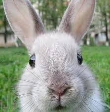 Mao el conejo, horoscopo chino, feng shui tradicional, Mao, animales del zodiaco chino